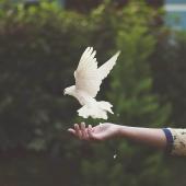 سلامٌ على المتآلفة أرواحنا معهم