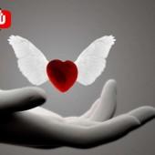 عشق القلب أم شغف العقل