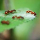 لـدغة النمل ..فوائدها وكيفية علاجها