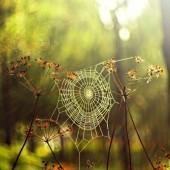 أسباب ظهور العناكب وطرق التخلص منها